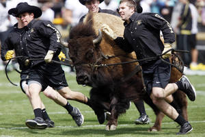 Photo - Would the Big 12 accept Ralphie and the University of Colorado back if Pac-10 chancellors and presidents don't allow them to enter their conference? AP PHOTO