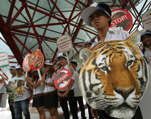 "photo - Thai activists hold posters urging people to stop the trading of tigers during the Convention on International Trade in Endangered Species, or CITES,  in Bangkok Sunday, March 3, 2013. How to slow the slaughter and curb the trade in ""blood ivory"" will be among the most critical issues up for debate at the 177-nation Convention on International Trade in Endangered Species, or CITES, that gets under way Sunday in Bangkok. And the meeting's host, Thailand, will be under particular pressure to take action. (AP Photo/Sakchai Lalit)"