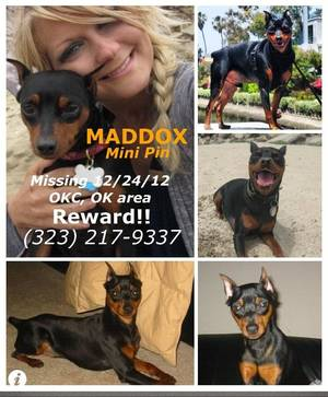 Photo - Jackie Vestal has been in Oklahoma City since Christmas searching for her dog, Maddox. Vestal has put up posters throughout Oklahoma City in an effort to find the dog. Photo provided
