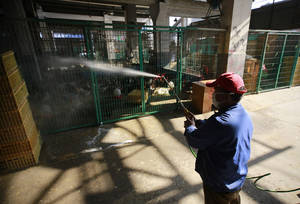 Photo - A worker spays disinfectant liquid to chicken cages at a chicken whole sale market on Tuesday April 2, 2013 in Shanghai, China. China's financial capital, Shanghai, on Tuesday activated an emergency response plan following the recent deaths of two men from a lesser-known strain of bird flu. (AP Photo)