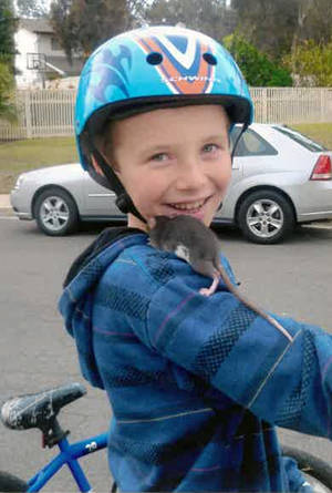 Photo - This undated photo released by Gomez Trial Attorneys courtesy the Pankey family, shows Aidan Pankey and one of his pet rats. Lawyers representing the Pankey family have filed a lawsuit against Petco Animal Supplies Inc., saying Aidan died from rat-bite fever contracted from a male rat purchased at one of the national chain's stores. (AP Photo/Courtesy Pankey Family)