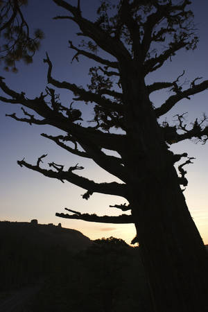 Photo - A tree failure occurs when a tree or large part of a tree breaks and falls. <strong>Ron Chapple</strong>