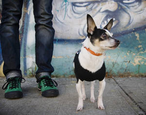 Photo - Small dog in Williamsburg