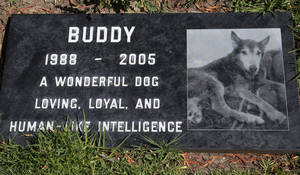 Photo - This photo taken on May 12, 2014, shows a grave marker for Buddy a beloved family pet memorialized at the Los Angeles Pet Cemetery in Calabasas, Calif. Saying goodbye to a beloved dog or cat is hard. Despite many options, an estimated 70 percent of owners will leave the body with their veterinarian to dispose of. (AP Photo/Nick Ut)