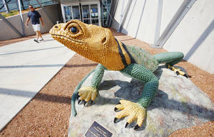 Photo - The sculpture Collared Lizard by Solomon Bassoff was unveiled this week at the entrance of the Patience S. Latting Northwest Library in Oklahoma City. Photos by Paul B. Southerland, The Oklahoman