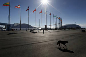 Photo - A stray dog wanders through Olympic Park ahead of the 2014 Winter Olympics, Thursday, Feb. 6, 2014, in Sochi, Russia. (AP Photo/Robert F. Bukaty)