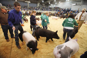photo - High school students participate in the Oklahoma Youth Expo on March 13 at State Fair Park in Oklahoma City.  Photo By Paul Hellstern, The Oklahoman Archives