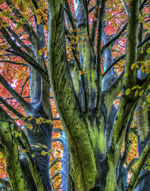 "Photo - ""Rain Tree,"" a photograph by Marvin Lee   Photo provided <strong>Photo provided</strong>"