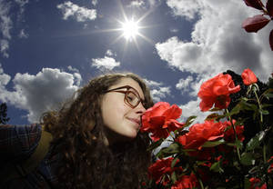 Photo - FILE - In this July 13, 2010 file photo, Hannah Lyons, of Portland, smells a rose as she walks through the International Rose Test Garden in Portland, Ore. The garden was founded during World War I as a way to preserve plants that European hybridists feared might be wiped out in the bombings. This summer marks 100 years since the start of World War I in Europe in 1914.  (AP Photo/Rick Bowmer, File)