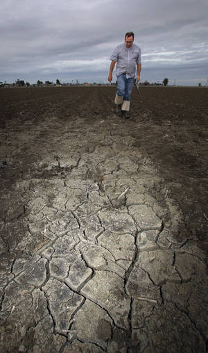 Photo -  A farmer in Lemoore, Calif., checks his dry tomato bed. A severe drought will cut into California vegetable harvest this year. AP photo  <strong>Gary Kazanjian -  AP </strong>