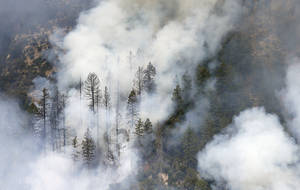 Photo - Smoke shrouds burned pine trees as the Slide Fire burns up Oak Creek Canyon on Friday, May 23, 2014, near Flagstaff, Ariz.  The fire has burned approximately 7,500 acres and is five percent contained. (AP Photo/Ross D. Franklin)