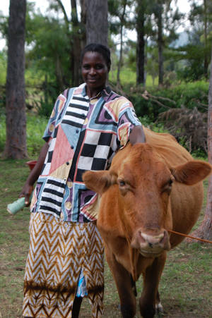 A Kenyan woman tends to the cattle in this World Neighbors photo. The group works with residents of this East African country to increase food security, expand revenue, decrease environmental degradation, establish savings and credit groups and more.