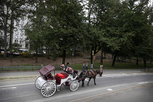 Photo - FILE - In this Oct. 23, 2013, file photo, a horse-drawn carriage heads along a road in New York's Central Park. Regulators are investigating allegations that one of New York's embattled carriage horse drivers tried to evade industry regulations by disguising an aging horse with a mild breathing ailment as another horse half its age. New York Mayor Bill de Blasio has vowed to ban the carriages, calling them inhumane. (AP Photo/Seth Wenig, File)