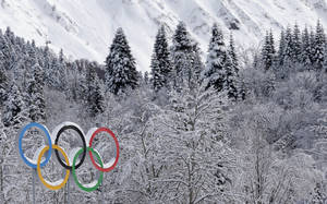 Photo - The Olympic rings are covered with freshly fallen snow prior to the cross-country sprint competitions at the 2014 Winter Olympics, Wednesday, Feb. 19, 2014, in Krasnaya Polyana, Russia. (AP Photo/Matthias Schrader)