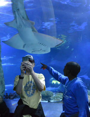 "Photo - A visitor attempts to take a ""selfie"" with a shark ray at the Newport Aquarium in Newport, Ky., on March 30, 2014. The aquarium, across the river from Cincinnati, remains a top tourist attraction as it turns 15 this month. (AP Photo/Dylan Lovan)"