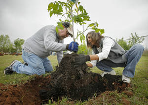 Photo - Jerry Newhouse and Christine Hoffman plant a tree as Oklahoma County Social Services starts an orchard to benefit low-income seniors in Oklahoma City. Photo by Steve Sisney, The Oklahoman archives