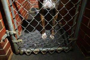 Photo - Legs of dog in kennel
