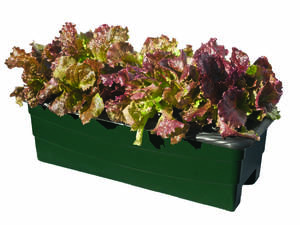Photo - Growing vegetables in an EarthBox is easier than growing plants in the ground, because the EarthBox controls the amount of water and fertilizer the plants receive. Photo provided.