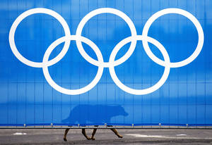 Photo - A stray dog walks past the Olympic rings during the official flag raising ceremony before the 2014 Sochi Winter Olympics in Sochi, Russia, Wednesday, Feb. 5, 2014. Authorities have turned to a company to catch and kill the animals so they don't bother Sochi's new visitors, or even wander into an Olympic event. (AP Photo/The Canadian Press, Nathan Denette)