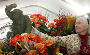 photo - Jane Goodall, the world's foremost expert on chimpanzees looks over flowers in Pasadena, Calif., Monday, Dec. 31, 2012. Goodall will be the Grand Marshall of the 2013 Rose Parade in Pasadena, Calif. New Year's Day. (AP Photo/Nick Ut)