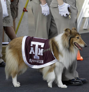 Photo - Texas A&M mascot Reveille VIII during the second quarter of an NCAA college football game against Louisiana Tech Saturday, Sept. 11, 2010, in College Station, Texas. (AP Photo/David J. Phillip) ORG XMIT: NYOTK