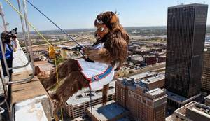 Photo - Rumble, the Thunder mascot steps away from the top of SandRidge Building as he rappels the south side of the building  in downtown Oklahoma City Wednesday, Oct. 13, 2010.   Photo by Jim Beckel