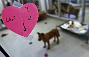 Photo - Workers at the Oklahoma City Animal Shelter have decorated in preparation for a Valentine's Day adoption special that begins Sunday. The shelter will have half-price adoptions all week and special activities Sunday. Photos by Chris Landsberger, The Oklahoman
