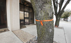 photo - Trees at the old Chase Bank drive-thru have been marked to be saved or moved as demolition work gets ready to start to make room for the new public safety center in downtown Edmond.