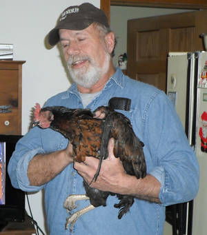 Photo - In this photo provided by Barb Murray, Brad Krueger of Alma Center, Wis., holds his neighbors' chicken, Cluck Cluck, on Friday, Dec. 28, 2012. The chicken, which the neighbors kept as a pet, is being credited for saving that family from an early-morning fire Thursday by waking the couple with its vocal clucking. (AP Photo/Courtesy Barb Murray)