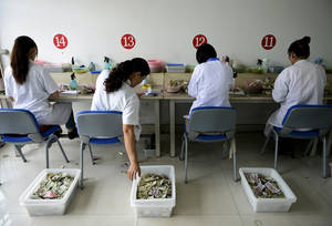 photo -   In this photo Sunday, Oct. 7, 2012, photo, workers count the small currency notes from bus fares at the accounting center of a bus company in Rizhao city in east China&#039;s Shandong province. A strong warning from the World Bank that growth in Asia may slow further dragged the price of oil Monday, Oct. 8, 2012, to its lowest close in two months. (AP Photo) CHINA OUT  