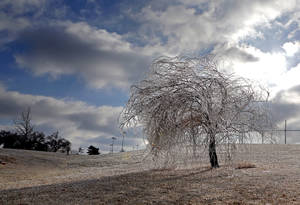 Photo -  December's ice covers a tree at Edmond's J.L. Mitch Park. The ice that happened months ago could be affecting the growth of trees this spring. PHOTO BY SARAH PHIPPS, THE OKLAHOMAN  <strong>SARAH PHIPPS -  The Oklahoman </strong>