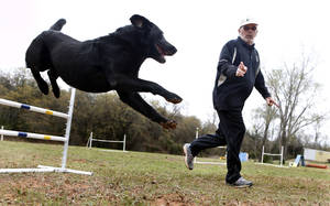 Photo - Henry, a black labrador and recent American Kennel Club national champ for agility, works with his owner Dennis Butler on Thursday, April 18, 2013 in Norman, Okla.  Photo by Steve Sisney, The Oklahoman <strong>STEVE SISNEY - THE OKLAHOMAN</strong>