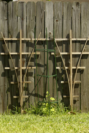 Photo - This Friday, May 23, 2014 photo shows a mirliton vine in a backyard in River Ridge, La. A Tulane University historian is working to restore the edible gourd called chayote, vegetable pear or mirliton to backyards across the Gulf Coast.  (AP Photo/Gerald Herbert)