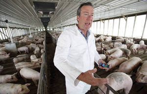 Photo - FILE - In this July 9, 2009 file photo Dr. Craig Rowles stands with hogs in one of his Carroll, Iowa, hog buildings. The farmer and longtime veterinarian did all he could to prevent porcine epidemic diarrhea from spreading to his farm, but despite his best efforts the deadly diarrhea attacked in November 2013, killing 13,000 animals in a matter of weeks. PED, a virus never before seen in the U.S. has killed millions of pigs in less than a year, and with little known about how it spreads or how to stop it, it's threatening pork production and pushing up prices by 10 percent or more.  (AP Photo/Charlie Neibergall, File)
