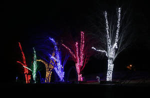Photo - Lighted trees flash in synchronicity to holiday music at the Downs Family Chiristmas Light Ministry in Norman. Photo by Steve Sisney, The Oklahoman <strong>STEVE SISNEY</strong>