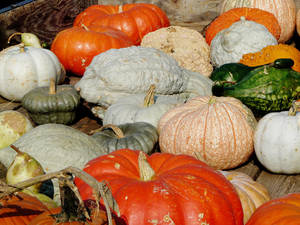 Photo - Pumpkins and gourds at the Cleveland County Farm market into the system. BY Connie Hefner, THE OKLAHOMAN ORG XMIT: KOD