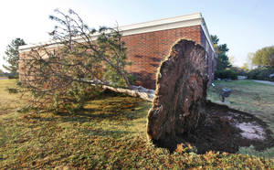 Photo - Left: A tree at the Episcopal Church of the Resurrection, 13112 N Rockwell Ave., is blown over Tuesday after a storm the day before. Photos by PAUL B. SOUTHERLAND, THE OKLAHOMAN