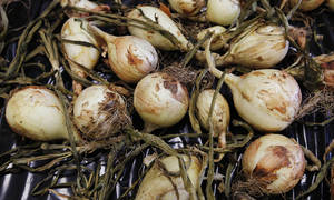 Photo - Newly harvested onions are laid out to dry Friday. The onions were grown near the Oklahoma County sheriff's substation in Midwest City as a part of an inmate gardens program. PHOTO BY PAUL B. SOUTHERLAND, THE OKLAHOMAN <strong>PAUL B. SOUTHERLAND - PAUL B. SOUTHERLAND</strong>