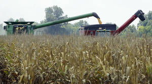photo -   In this photo taken July 16, 2012, harvested corn is dumped from a combine, left, into a hopper being towed by a tractor near Altheimer, Ark. The U.S. Agriculture Department Friday, Aug. 10, cut its projected U.S. corn production by 17 percent from its forecast in July, and 13 percent from last year. (AP Photo/Danny Johnston)