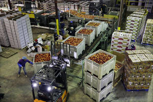 Photo - FILE - In this Tuesday, Aug. 27, 2013, file photo, workers load large containers of nectarines for sorting at Eastern ProPak Farmers Cooperative in Glassboro, N.J. The Commerce Department reports on wholesale prices for August on Friday, Sept 27, 2013. (AP Photo/Mel Evans, file)