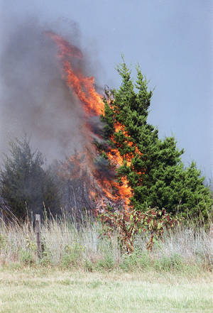 photo - An Eastern red cedar tree is seen ablaze during a 2000 wildfire about 3 miles north of Binger. <strong>MILTON PADDLETY  NOT STAFF - THE OKLAHOMAN ARCHIVES</strong>