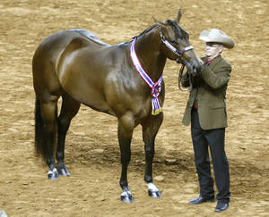 "Photo - ""Non Smokin Kid"", shown by Tim Finkenbinder of Collinsville, TX, wins the ""2 year old Geldings"" competition during the AQHA World Show at State Fair Park in Oklahoma City, OK, Saturday, November 23, 2013,  Photo by Paul Hellstern, The Oklahoman"