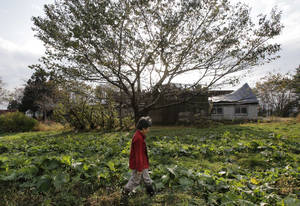 "photo - In this Nov. 7, 2012 photo, farmer Keiko Kikukawa walks through her field where she just finished harvesting organic-grown rhubarbs  in Rokasho village, Aomori Prefecture, northern Japan. By hosting a high-tech facility that would convert spent fuel into a plutonium-uranium mix designed for the next generation of reactors, Rokkasho was supposed to provide fuel while minimizing nuclear waste storage problems. Those ambitions are falling apart because years of attempts to build a ""fast breeder"" reactor, which would use the reprocessed fuel, appear to be ending in failure. ""It's so unfair that Rokkasho is stuck with the nuclear garbage from all over Japan,"" Kikukawa said. ""And it's not going to go away even if the Rokkasho plant stops immediately. We're dumping it all onto our offsprings to take care of. It's so irresponsible."" (AP Photo/Koji Sasahara)"