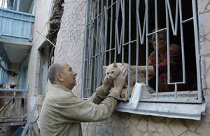 Photo - Valery who gave only his first name takes his suffered cat from his damaged house after shelling in the city of Slovyansk, Donetsk Region, eastern Ukraine Monday, June 30, 2014. Residential areas came under shelling on Monday morning from government forces. (AP Photo/Dmitry Lovetsky)