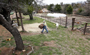 Photo - Matthew Miller carries a bale of straw in his gardening area in eastern Oklahoma County. Photo by Jim Beckel, The Oklahoman