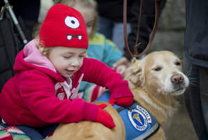 photo - FILE - In this Tuesday, Dec. 18, 2012 file photo, Addison Strychalsky, 2, of Newtown, Conn., pets Libby, a golden retriever therapy dog, during a visit from the dogs and their handlers to a memorial for the Sandy Hook Elementary School shooting victims in Newtown. As the shock of Newtown's horrific school shooting starts to wear off, as the headlines fade and the therapists leave, residents are seeking a way forward through faith, community and a determination to seize their future. (AP Photo/David Goldman, File)