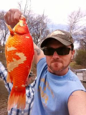 Photo - Daxton Neal, of Tulsa, was with friends on Grand Lake on April 13 and 14 when his minnow lure caught a two-half-pound goldfish. Photograph provided by Daxton Neal