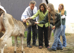 Photo -   Vermont Gov. Peter Shumlin, left, and U.S. Labor Secretary Hilda Solis, second from left, view a calf at the dairy at Vermont Technical College in Randolph, Vt., Tuesday Oct. 2, 2012. Attending are students Rachel Arsenault, second from right, and Stephanie Nault, right. Solis was in Vermont to announce a $3.4 million agricultural training grant for Vermont Tech. (AP Photo/Wilson Ring)