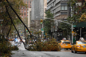 Photo -   Trees are downed from Sandy on the Upper West Side of New York's Manhattan borough on Tuesday, Oct. 30, 2012. Sandy, the storm that made landfall Monday, caused multiple fatalities, halted mass transit and cut power to more than 6 million homes and businesses. (AP Photo/The Record of Bergen County, Carmine Galasso) ONLINE OUT; MAGS OUT; TV OUT; INTERNET OUT; NO ARCHIVING; MANDATORY CREDIT