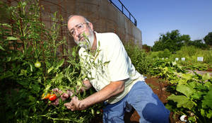 Photo - Guthrie Mayor Mark Spradlin picks produce, in the community garden, Thursday, July 18, 2013. Photo by David McDaniel, The Oklahoman <strong>David McDaniel - The Oklahoman</strong>